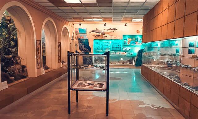 Фото зала в музее древностей