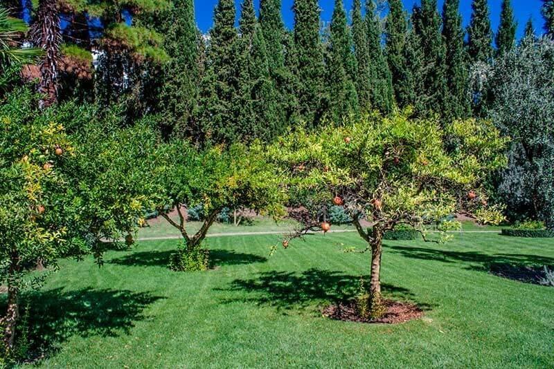 Трехсотлетняя маслиновая роща