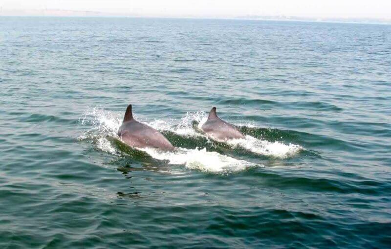 Фото дельфинов в черном море от пользователей