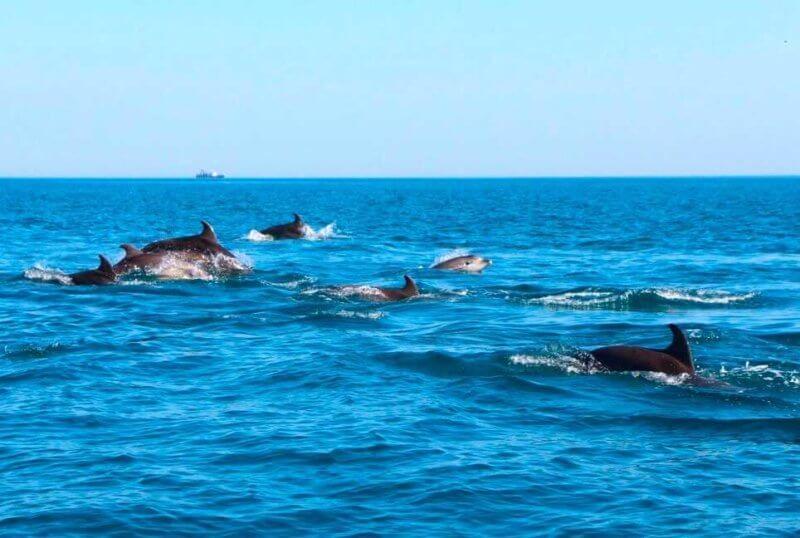 Стая Дельфинов в черном море