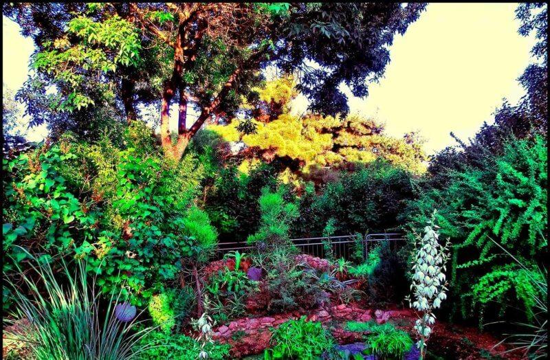 Растения Дендропаркв в Евпатории