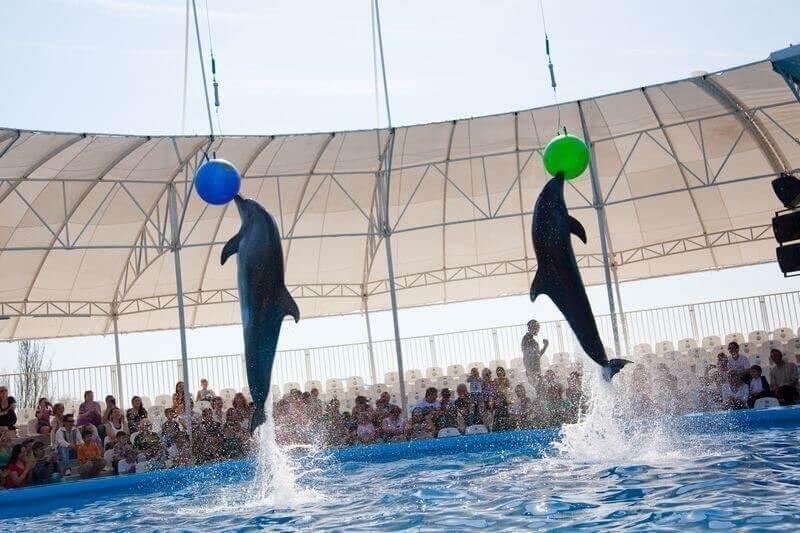 Фото из дельфинария Немо в Феодосии