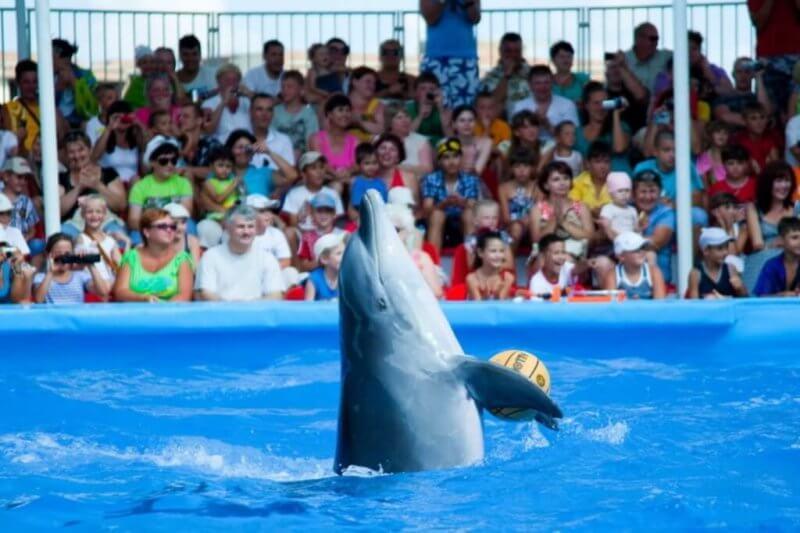 Фото дельфина в дельфинарии Немо
