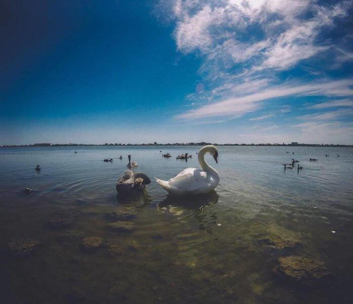 Лебединое озеро в Евпатории