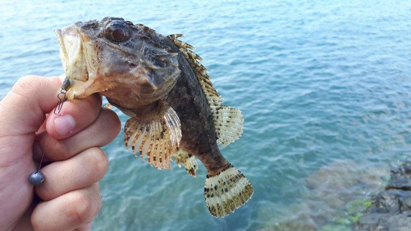 Морская рыбалка в Орджо