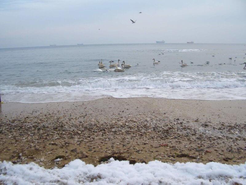 На фото пляж Динамо в Феодосии