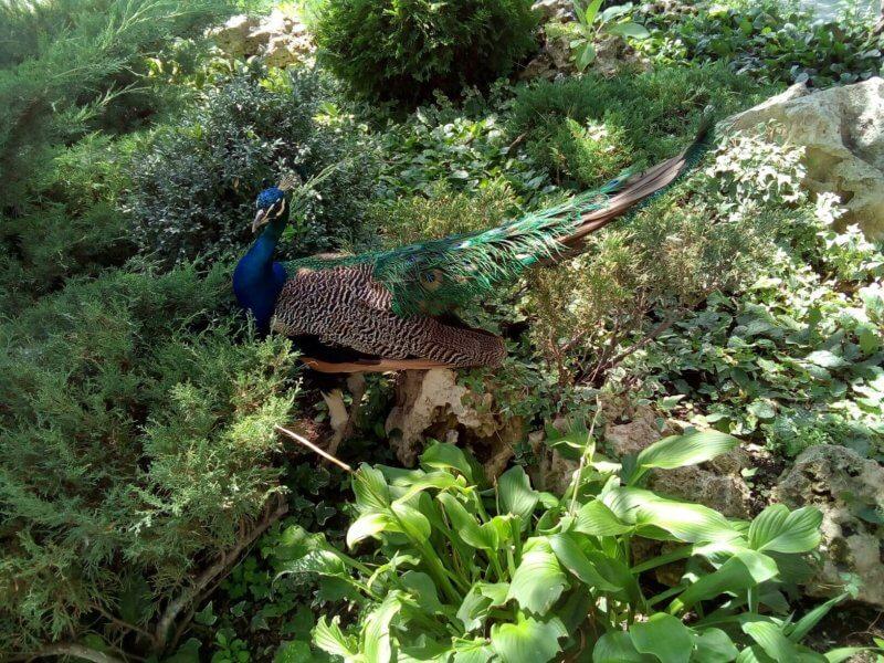 Дом птиц - парк Тайган