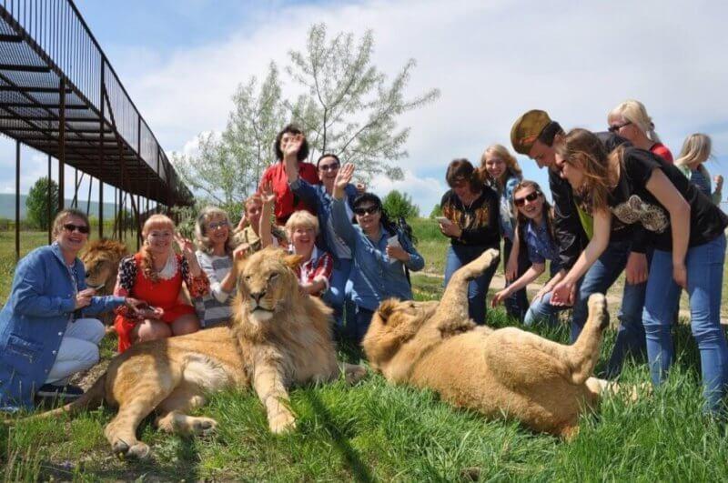 Выезд ко львам  - сафари парк Тайган