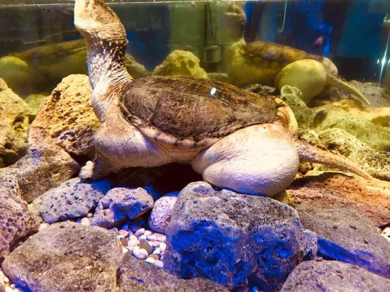 Фото из аквариума в Евпатории
