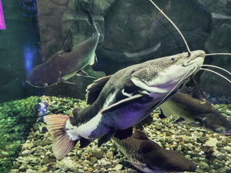 Евпаторийский аквариум - фото рыб хищьников
