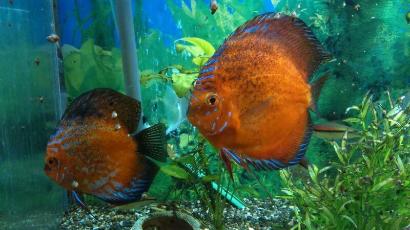 Аквариум с увеличительными стеклами в Алуштинском аквариуме