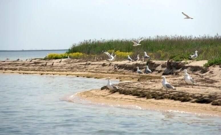 На фото Каркинитский залив