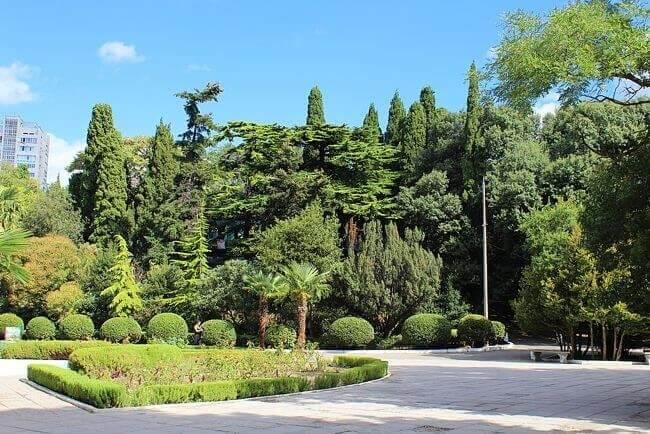 Реликтовые деревья санатория Ясная Поляна