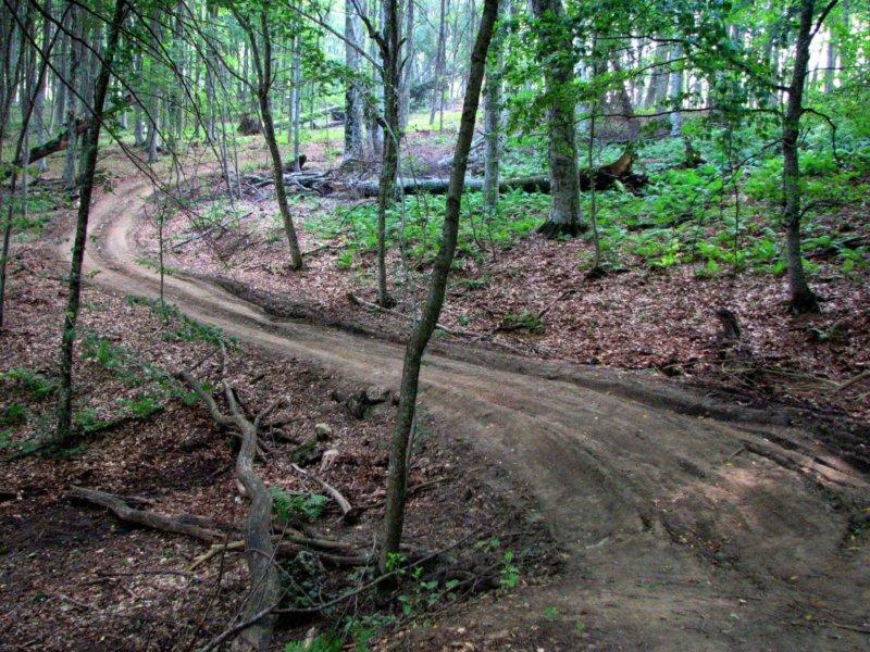 Зуйский лес - фото