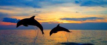 Дельфины черного моря