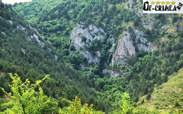 Буковый лес в подножья Узунджи
