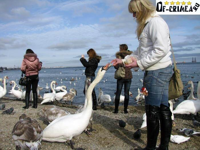 Кормление птиц на Лебяжьих островах
