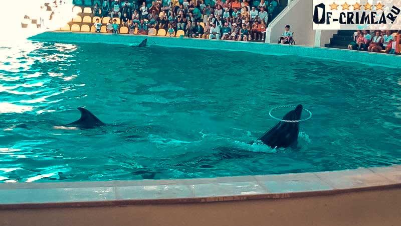 Дельфинарий Коктебель - представление