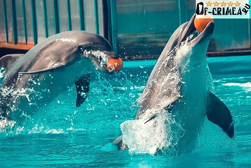 Дельфинарий в Коктебеле - фото