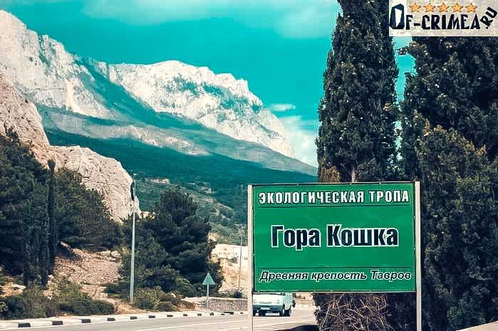 gora-koshka-2