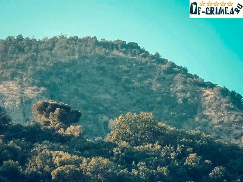 Растительность горы Кастель