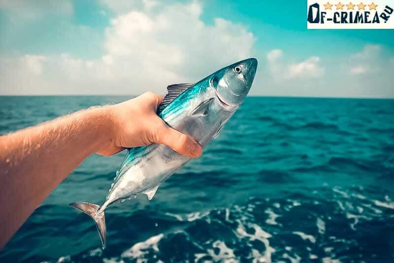 Лучшая рыбалка в Крыму