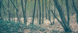 Агармышский лес: