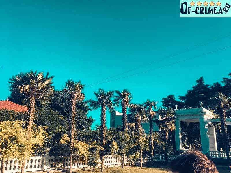 На фотографии Никитский ботанический сад