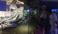 alushtinskiy-akvarium-5