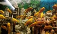 alushtinskiy-akvarium