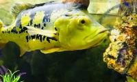 evpatorijskij-akvarium-5