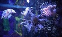 evpatorijskij-akvarium-6
