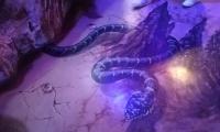 evpatorijskij-akvarium-8