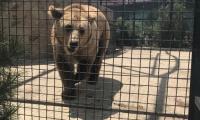 safari-park-tajgan-2