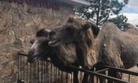 safari-park-tajgan-3