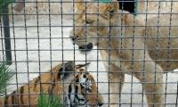 safari-park-tajgan-7