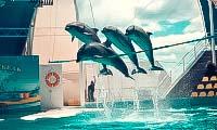 delfinarij-v-koktebele