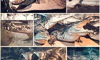 krokodilyarium-v-yalte-2