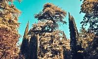 nikitskij-botanicheskij-sad-3