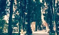 nikitskij-botanicheskij-sad